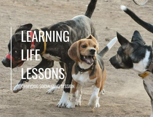 Learning Life Lessons