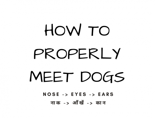 HOW TO PROPERLY MEET DOGS