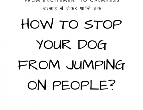 HOW TO STOP YOUR DOG FROM JUMPING ON PEOPLE?